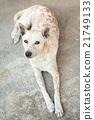 Stray dog 21749133