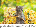 Little kitten in the garden with flowers 21754157