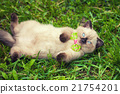 Little wearing bow tie lying on the back in grass 21754201