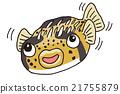 河豚 密斑刺 鱼 21755879