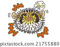 河豚 密斑刺 插畫 21755880