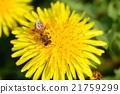 spring bloom blossom 21759299