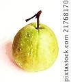 水果 水彩画 水彩 21768170