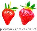 水果 水彩画 水彩 21768174