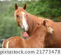 Beautiful mare with foal 21773478
