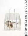 鼠標 老鼠 深灰色 21775522