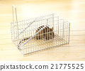 鼠標 老鼠 深灰色 21775525