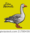 Isolated farm goose on a yellow background 21780436