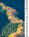 산골짜기, 산, 삼나무 숲 21780489