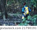 森林 鹿 野生 21790191