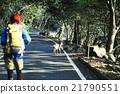 徒步旅行 野生 鹿 21790551