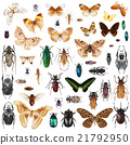 Set of insects 21792950