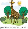 giraffa, giraffe, wild 21794491