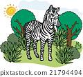 zebra, zebras, wild 21794494