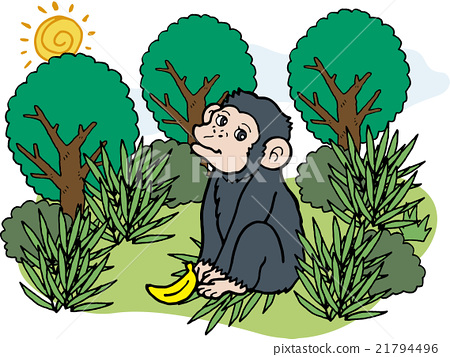 野生動物黑猩猩 21794496