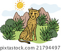 獵豹 野生生物 野生動物 21794497