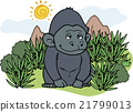 野生 動物 大猩猩 21799013