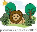 Wildlife Lion 21799015