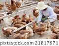 여성, 여자, 닭 21817971