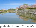 spring cherry blossom on the moat of Himeji Castle 21826656