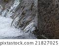 年輕的香魚 香魚 逆流而上 21827025