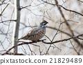 bird, nature, sitting 21829489