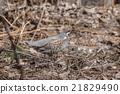 bird, sitting, branch 21829490