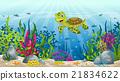 水下 景色 风景 21834622