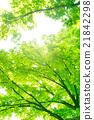 밤나무 21842298