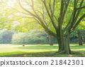 大树,公园 21842301