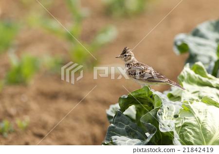 bird, birds, fowls 21842419