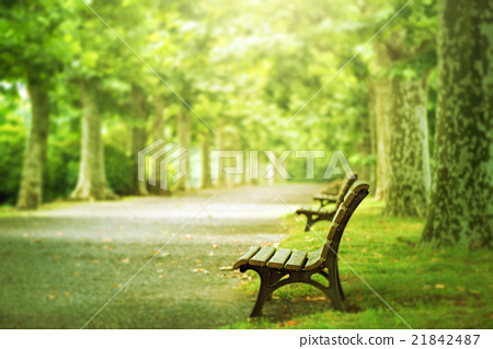 長凳和樹木 21842487