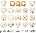 dog, dogs, animal 21842490