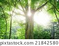 신록의 나무와 생태 21842580