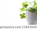 四葉 盆栽 植物 21842609