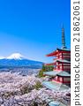 富士山 櫻花 櫻 21862061