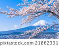 富士山 世界遺產 吉野櫻花樹 21862331