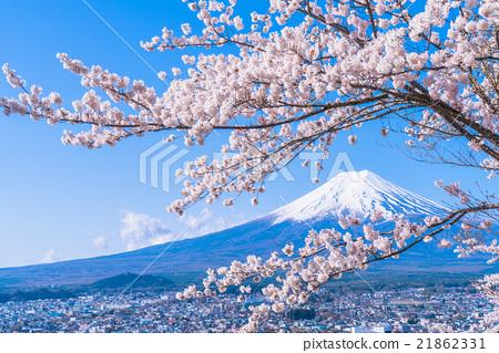 富士和櫻花盛開 21862331