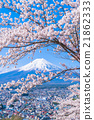 富士和櫻花盛開 21862333