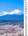 富士和櫻花盛開 21862427