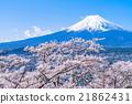富士和櫻花盛開 21862431