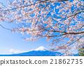 富士和櫻花盛開 21862735