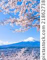 富士和櫻花盛開 21862738