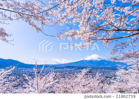 富士和櫻花盛開 21862739
