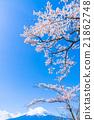 富士和櫻花盛開 21862748