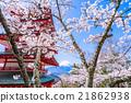 富士山 櫻花 櫻 21862938