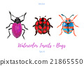 Set of hand painted watercolorbugs, vector. 21865550