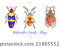 Set of hand painted watercolorbugs, vector. 21865552