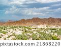 阿曼 绿洲 沙漠 21868220