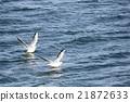 海鷗 鷗 鳥兒 21872633